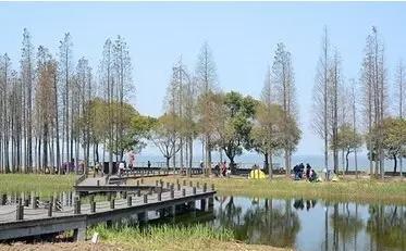上海淀山湖森林公园_上海吃货踏青的御花园