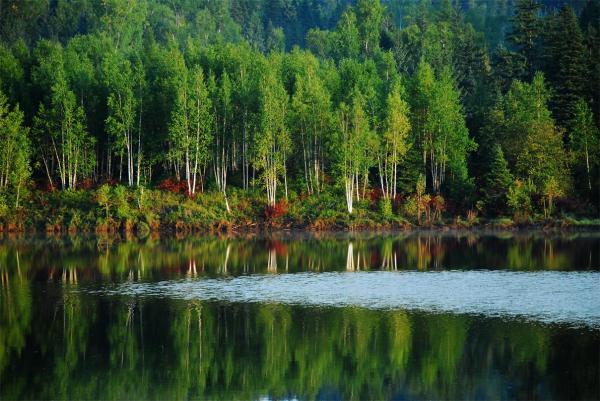 亚洲団地妻_各有特色:五营国家森林公园—亚洲最大的红松林集散地;茅兰沟—小
