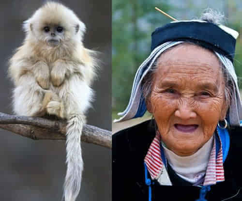 中国老太太图片