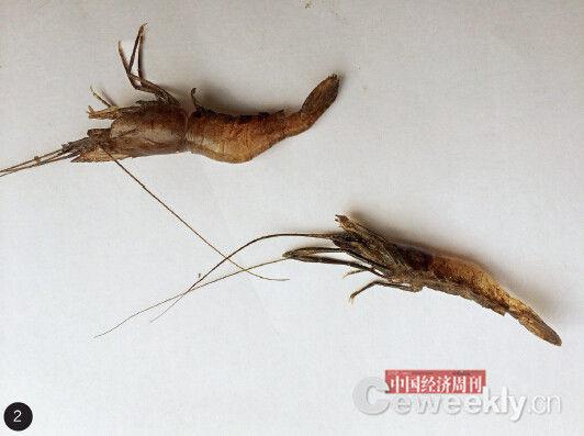 河中鱼虾越来越少,且外表发黑。《中国经济周刊》记者 崔晓林摄