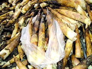 户外赏春笋 享受新鲜出炉的竹笋宴