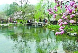 太子湾公园赏樱花怒放。