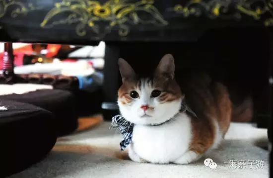 猫咪主题咖啡馆创业计划书图片