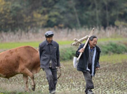 开裂的农村文化:白叟因曾孙取名未按辈份吊颈自杀
