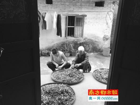 越南新娘黄中田和她的丈夫莫德元在屋门前分拣自家种植的茶叶。