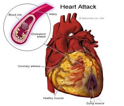 变温动物的心脏结构图