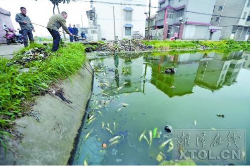 袁孝明在打捞水池中的死鱼(记者 陈旭东 摄)