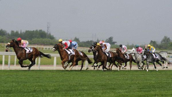 成都迪拜赛马节