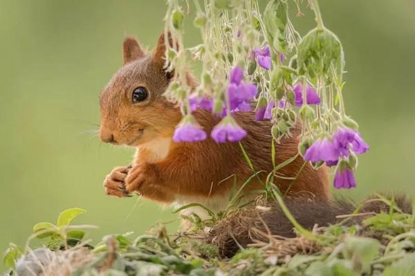摄影,呆萌的小松鼠
