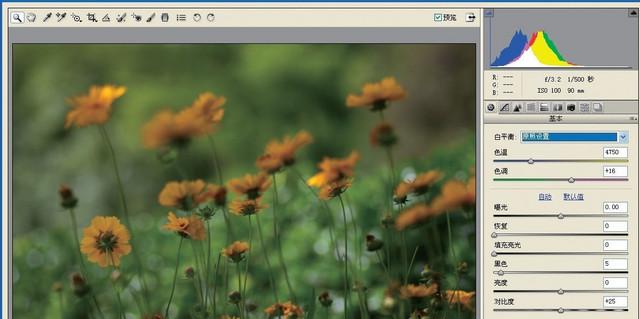 记录春天的色彩 花卉摄影的拍摄技巧