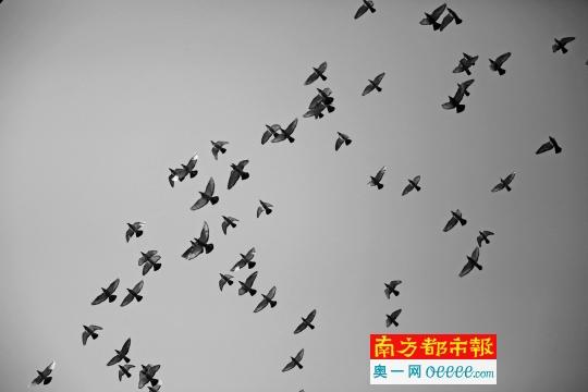放飞梦想 鸽子 飞翔 女性图片