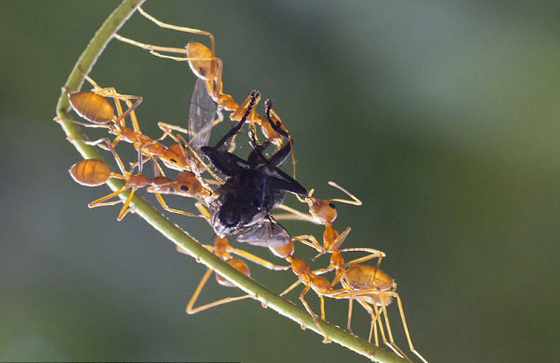 印度饥饿蚂蚁上演争食猴子(大战)digitech单块效果器坏组图图片