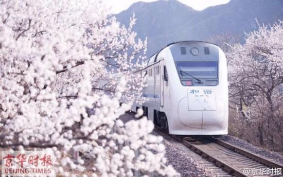 """列车穿梭花海,时刻也好像在这一刻运动了。有网友称这组相片为""""樱木花道""""。"""