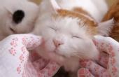 猫叔眯眼伸头享受主人按摩