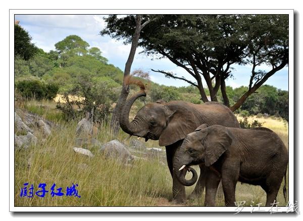 罗江人走非洲 之 imire野生动物园