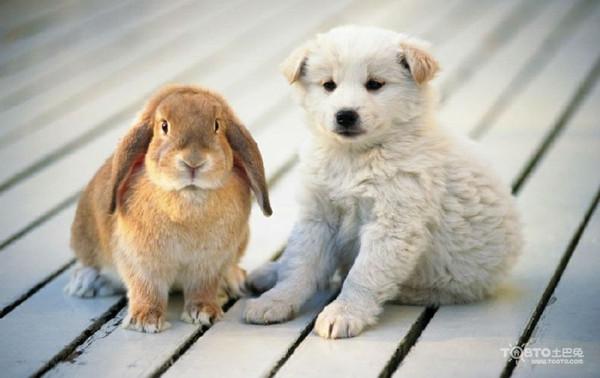 属狗和什么属相最配 属狗的属相婚配表大全