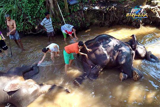 为大象清洗