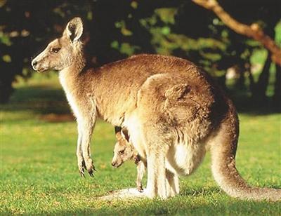 旅游业或成在澳华人发展新引擎