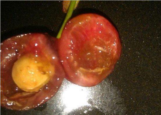 樱桃会生蛆吗_小编语 现在是樱桃大量上市的季节,但\