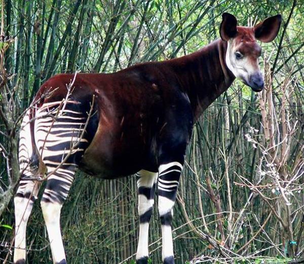 这些奇形怪状的动物 竟然真实存在