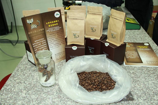 台湾屏东科技大学独步全世界,胜利研制麝香猫咖啡。 图自台湾《结合晚报》