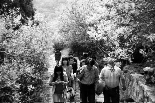 龙山太原第二届丁香节(二):去龙山有好多条路v丁香(图)笔记结读书丁香400图片