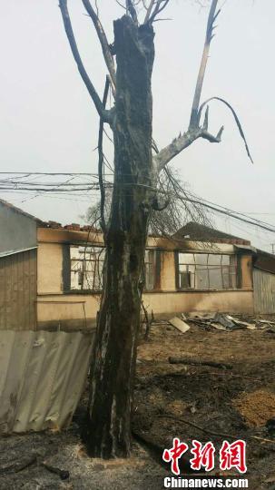 黑龙江尚志一村屯火烧连营 26户民房过分 钟欣 摄