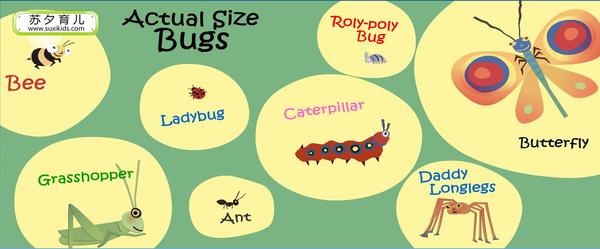 英文绘本《bugs!bugs!bugs!》带小宝宝看虫子云裳羽衣竞完美攻略图片