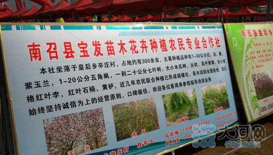 /南召玉兰产量占全国六成中南海奥运场馆都有种植(组图)