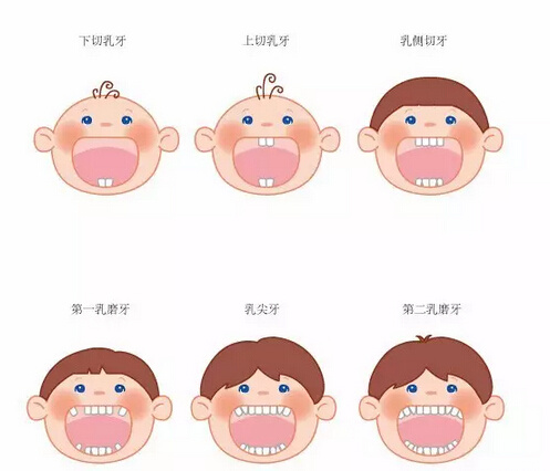 【换乳牙】乳牙换牙顺序 乳牙脱落时间表