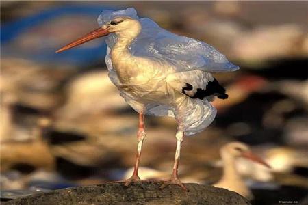 地球的污染,大自然回应的警告!
