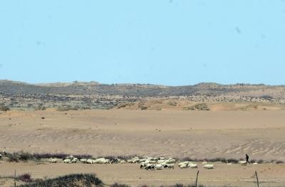 巴彦淖尔镇其其格家左近,只要少点的草供羊群吃。
