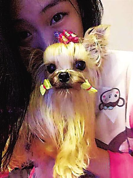 昨天,南岸区,心爱的约克夏宠物狗在廖密斯的女儿雪儿怀中撒娇。 记者 黄平 摄