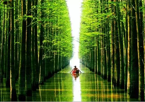 水上森林画中行图片