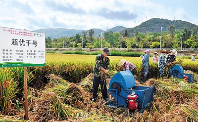 """近日,水稻专家在海南三亚示范基地对袁隆平指导的第五期超级杂交稻""""超优千号""""进行了测产验收。测产验收的结果是平均亩产达941.79公斤,打破了海南水稻亩产最高纪录。"""