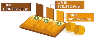 超级杂交稻平均亩产创纪录