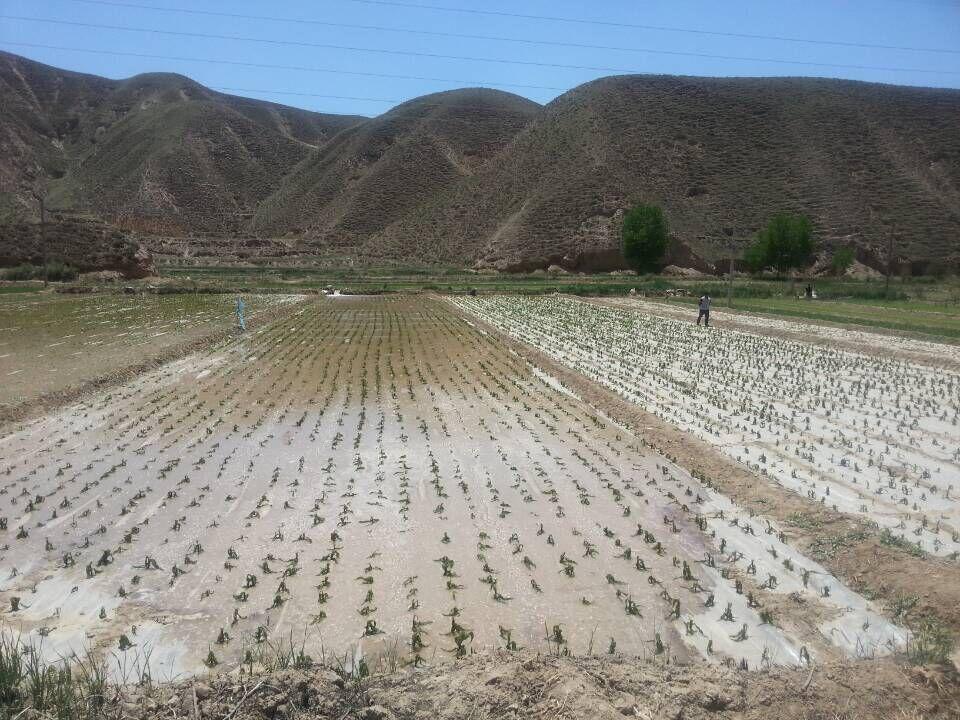 据青海省民政厅报告,海东市4个县(区)12万人受灾,农作物受灾面积8000公顷,直接经济损失8600余万元。