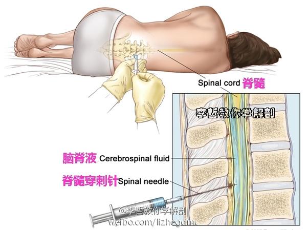腰穿经过的层次结构图