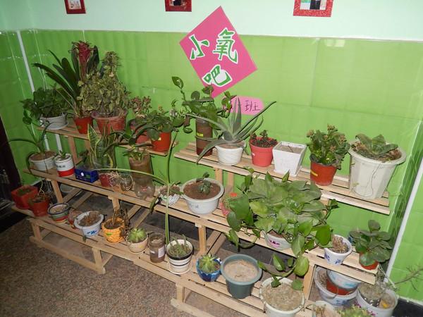 图为高新区艾茵堡幼儿园植物角