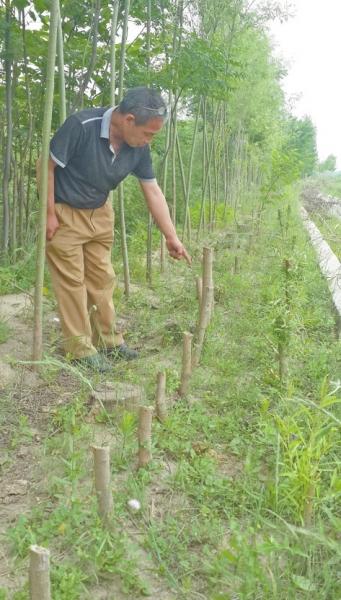 看着树木被砍,李景国很无法。