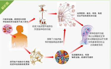 元宝枫神经酸对身体有什么好处