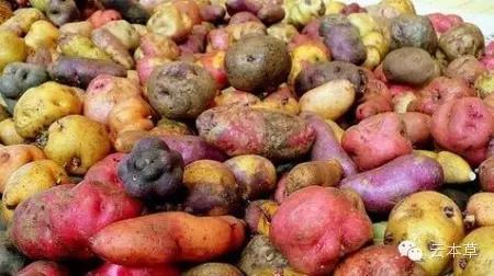 秘鲁南部安第斯山区作为土豆的原