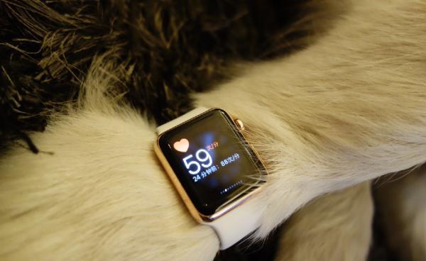 洋跟帖|王思聪给狗戴两只苹果手表,看外国网友如何疯狂吐槽