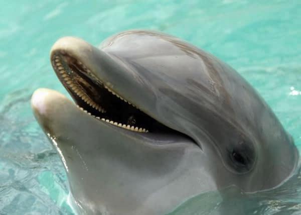 据英国《镜报》报导,一只海豚意外搁浅秘鲁首 都利马海滩,当地一对在图片