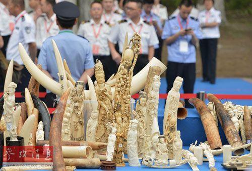 这是行将被烧毁的不法象牙及象牙成品(5月29日摄)。新华社记者 李鑫 摄