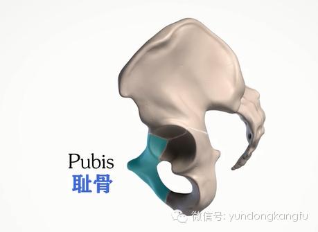 骨盆结构解剖 男女骨盆的差异