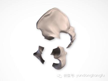 骨盆结构解剖——男女骨盆的差异