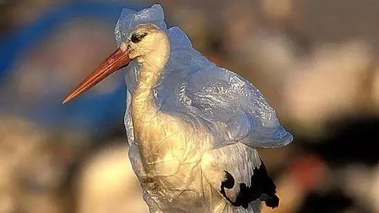环境污染中动物心酸照