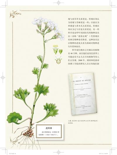 植物猎人的前世今生(组图)