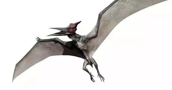 """种会飞的爬行动物,在希腊文的意思为""""没有牙的翅膀"""""""